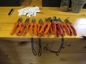 how to clean your garden shears