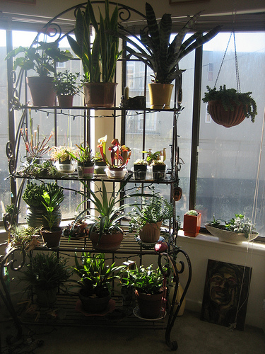 Caring for Indoor Plants During Winter - Sunday Gardener