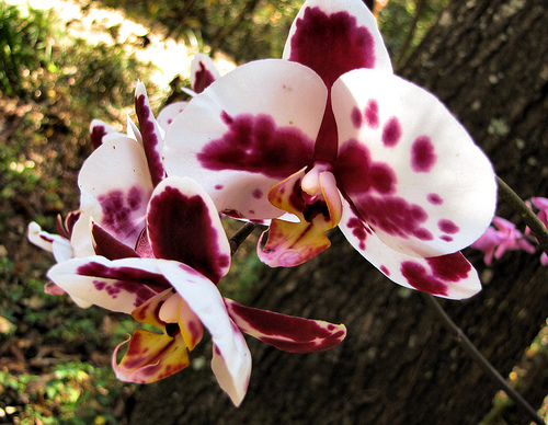 Orchids outdoors