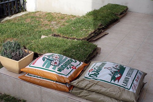 Lawn + fertilizers