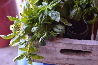 How to Build a Hanging Herb Garden