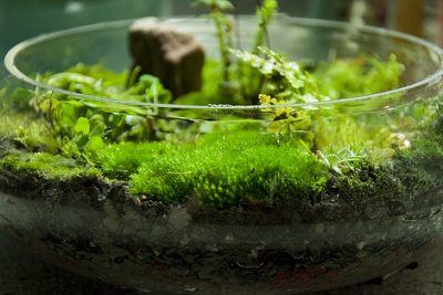 Differences between Peat Moss and Compost
