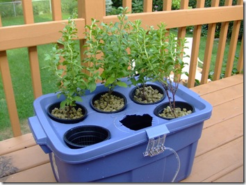 garden hydroponic gardening slideshow innovations