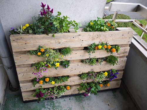 Making a Basic Pallet Garden