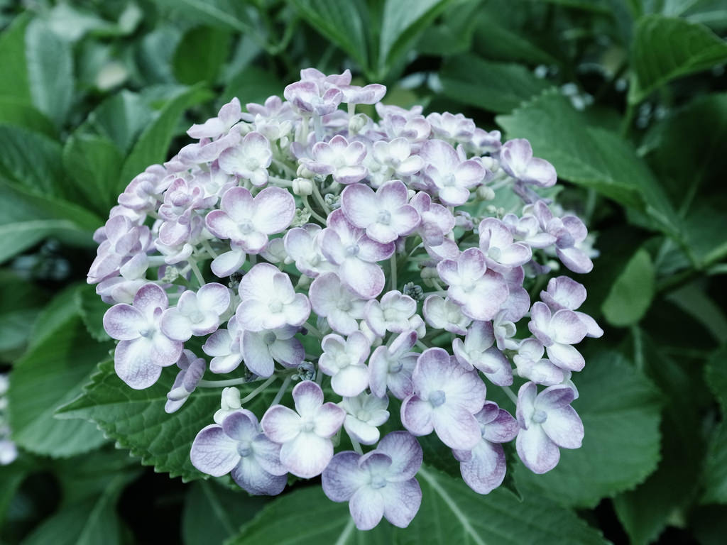 The Best Fragrant Shrubs to Use in Your Garden II
