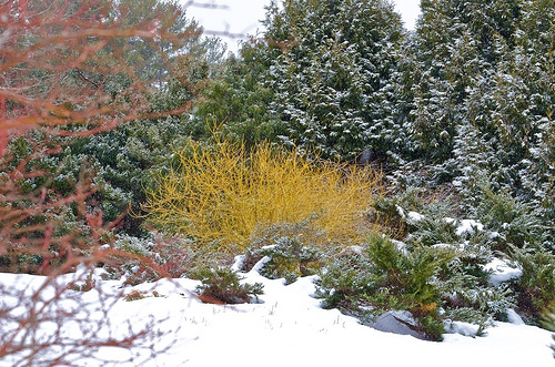 How to Add Color to Your Winter Garden?