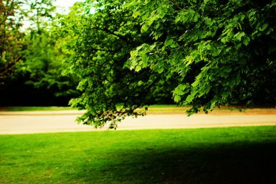 How to Fertilize a Tree II: The Most Effective Method