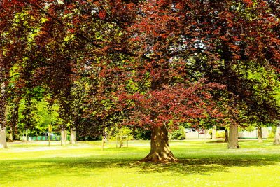 How to Fertilize a Tree I: Potential Problems